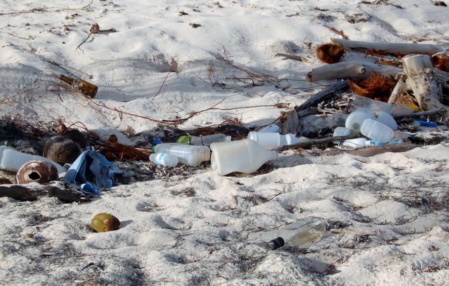 novembre 2018 nettoyage littoral avec l'AMAPMG
