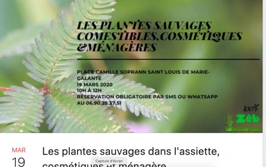 plante marie galante