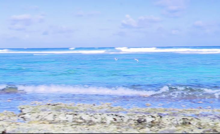 Covid 19 à Marie Galante : on peut se baigner sur les plages de Marie-Galante ?